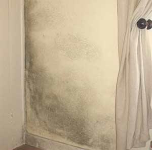 Stop plísním v bytě