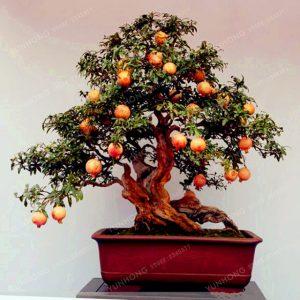 Krása bonsaí