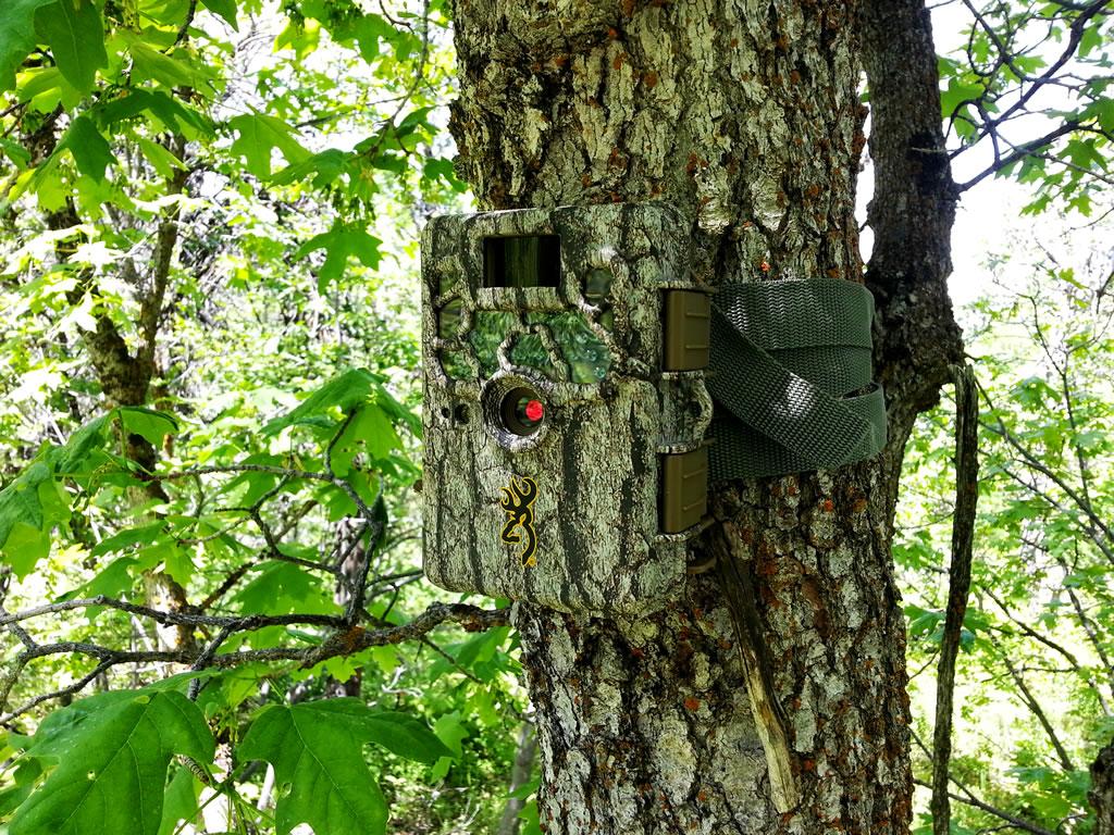 Pozorování divoké přírody nikdy nebylo jednodušší