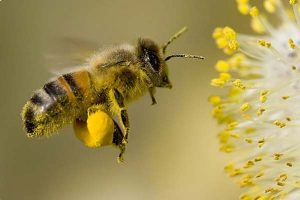 Chovejte včely